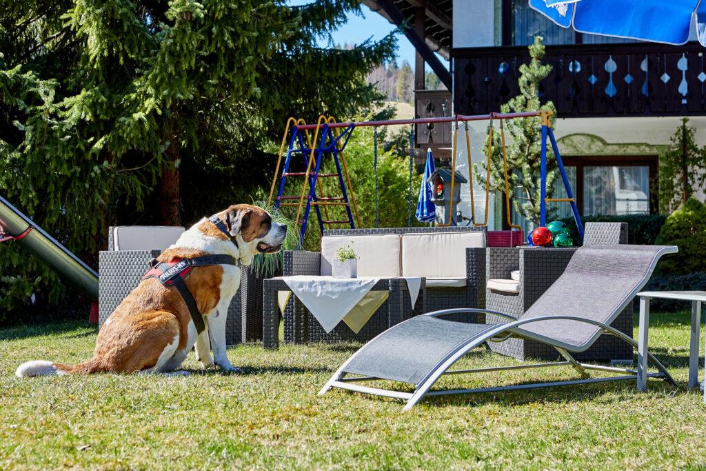 Hotel Bichlerhof Mittenwald Garten Mit Hund